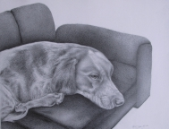 13,Couch Potato.困倦的狗 32x42. 2010, Pencil Drawing