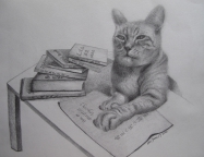 14,Wise Cat 睿智的猫.28x34.2010, Pencil Drawing 铅笔素描